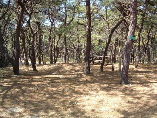 North Of Highland Camping Area: Campsite # 55 in Area 2