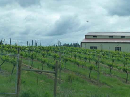 Becker Vineyard