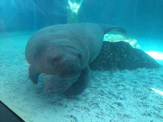 Mote Marine Aquarium Price