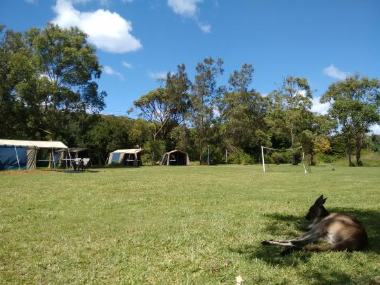 Melaleuca Surfside Backpackers: Área de camping