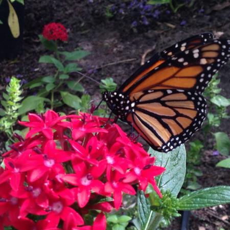 Butterfly Estates Foto