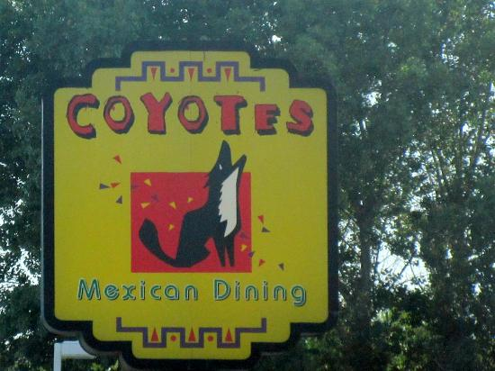 Coyotes, Highway 88, Lockeford, Ca