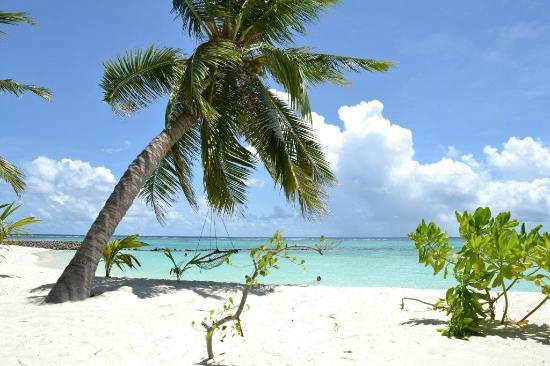 Summer Island Maldives: west beach