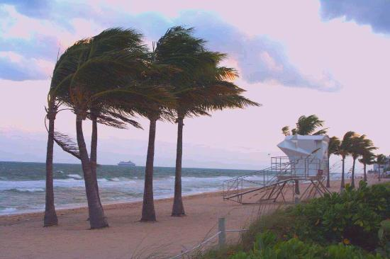 Windy Day Picture Of Fort Lauderdale Beach Fort