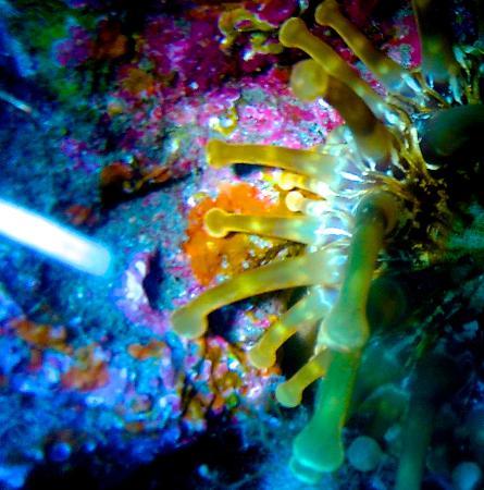 L&J Diving Tenerife: El Bajoncito, beautiful dive