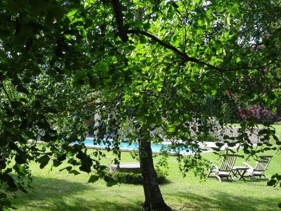 Le Mas des Alibeaux : la piscine entre les arbres et la pelouse