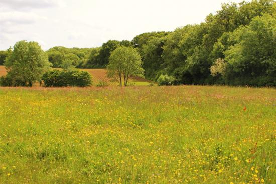 Langford Budville, UK: Beautiful scenery on the afternoon walk.