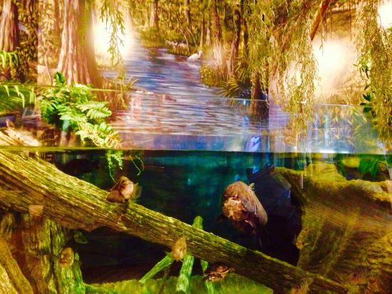 The Loxahatchee River Center: Nature
