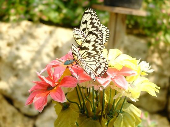 Ryugujo Butterfly Garden