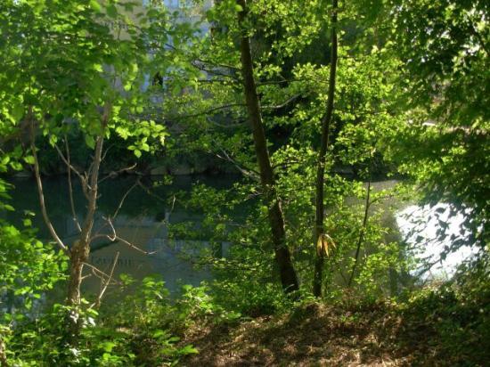 Le Jardin de la Reyssouze : petit sous bois en bordure de rivière