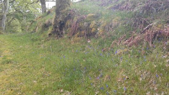 YHA Kings: See bluebells in our wood in Spring