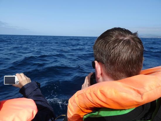 Terra Azul Azores Whale Watching: Tolle Aussicht- Nicht!