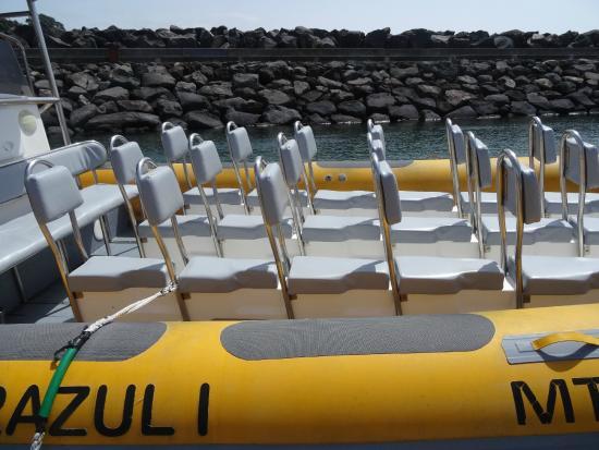 Terra Azul Azores Whale Watching: Das Boot