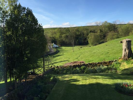 Broomshaw Hill Farm: Field where sheep grazed