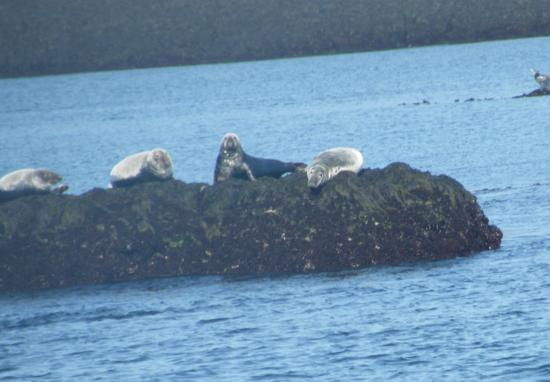 Brier Island, Canada: Seals on Rocks