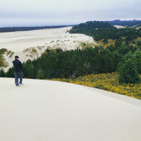 Флоренция, Орегон: Sand dunes behind Jessie M. Honeyman Memorial State Park.