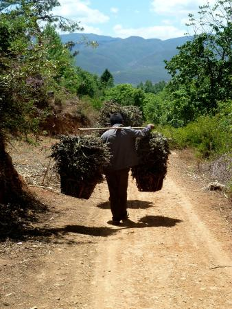 Yunnan Shaxi Ancient Town: farmer carrying his crops