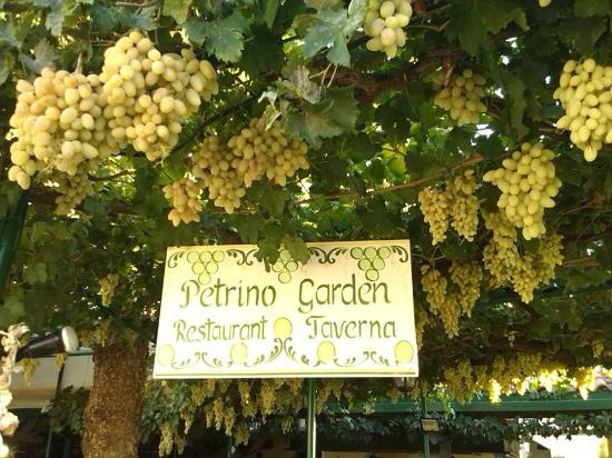 Petrino Garden: Lovely Grapes