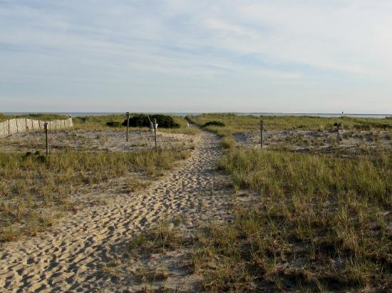 East Harbour: the walk to the beach surrounded by song birds