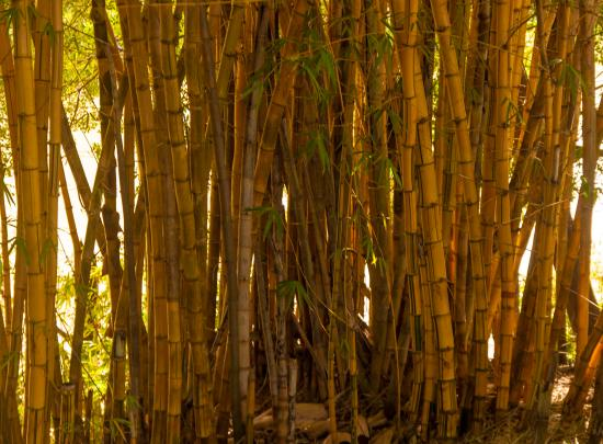 Lismore Visitor Information Centre: Bamboo