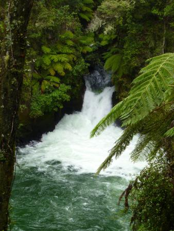 Wikitoria Maori Healing