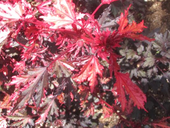 Sherman Library & Gardens: One colorful leaf group
