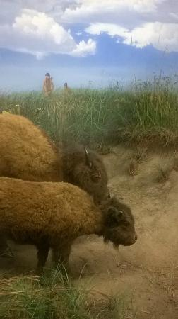 Illinois State Museum: Prairies in the Prairie State a look at the wildlife.