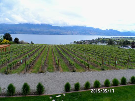 Quails' Gate Winery : vineyard