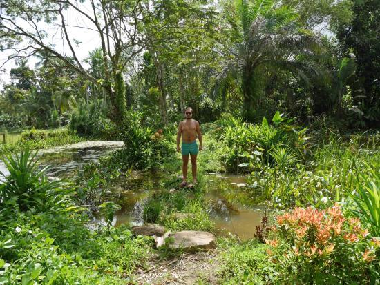 เอปาวิลลาลูเกเทีย: Exploring the ponds. Not scared of a few bugs..