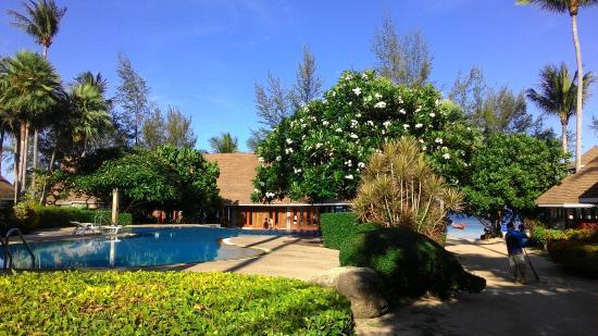 Koh Tao Coral Grand Resort : Pool