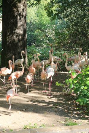 Garten puts Munkholm zoo