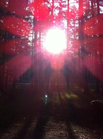 Traverse City State Park : sunshine!
