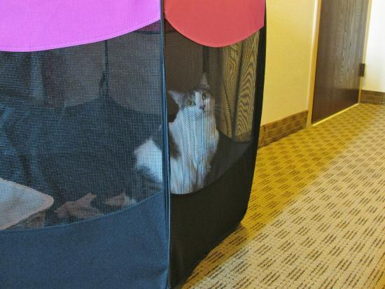 Comfort Suites Baymeadows: enough room for our cats playpen