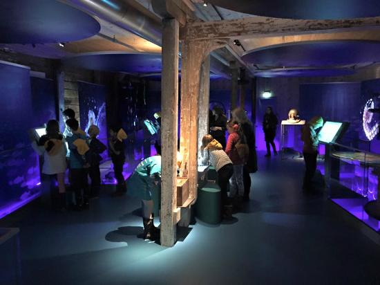 """The Norwegian Fisheries Museum: The exhibition """"A world under water"""""""