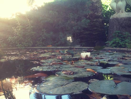 Residencia Salesiana Marti-Codolar: Garden pools