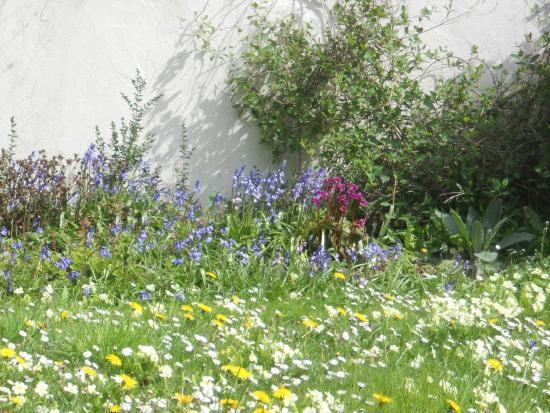 Mayrose Farm: Spring flowers