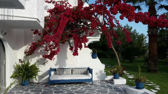 Pine Trees Art Hotel: Ein sehr schönes Hotel!2015 neu eröffnet. Liebevoll renoviert.Alles stimmig!!!!!