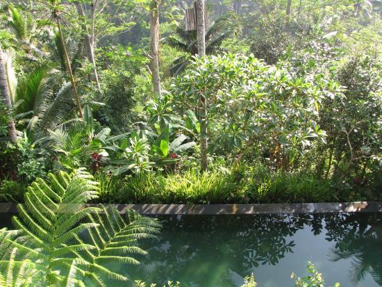 Umah Lu'ung: бассейн