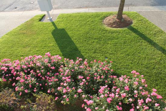 Bay Creek Vacation Rentals: Nice lawn