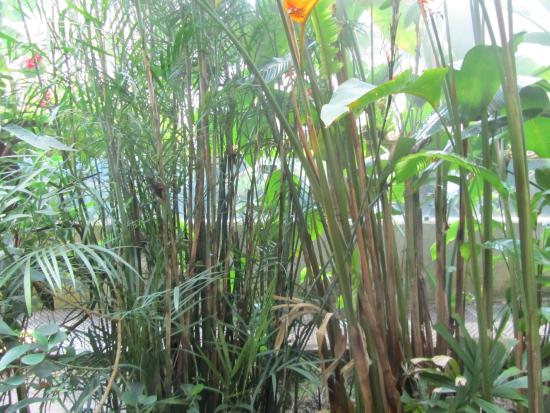 Real jardin botanico fotograf a de real jard n bot nico for Jardin botanico tarifas