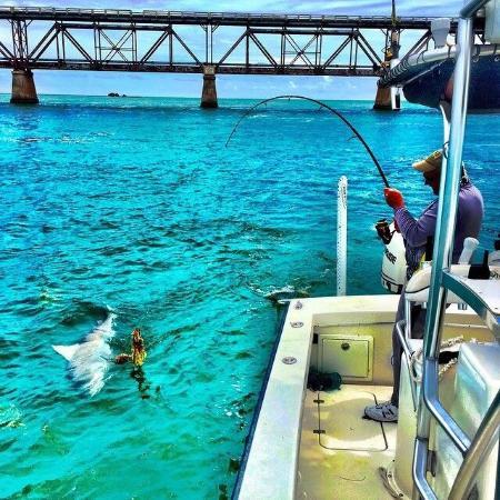 Tarpon fishing charters marathon florida picture of for Marathon key fishing