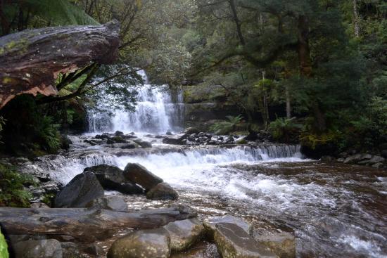 Tasmania I Drive: Stunning Liffey Falls