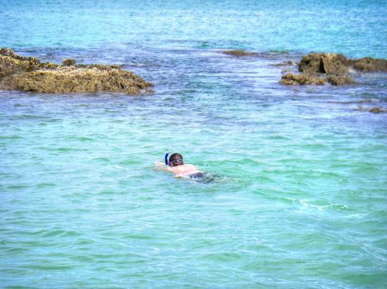 Whangarei, Nowa Zelandia: Let's snorkel