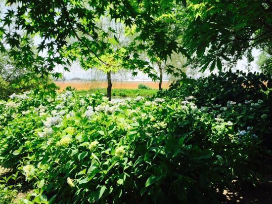 Moriyama, Japan: もりやま芦刈園