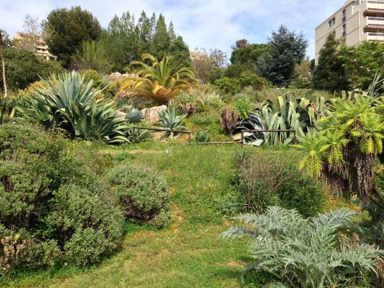 Botanical garden of nice picture of jardin botanique nice tripadvisor for Jardin botanique nice