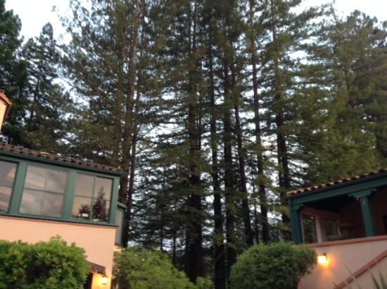 Applewood Inn: Redwoods