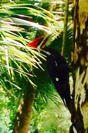 Jupiter, FL: Nature Park