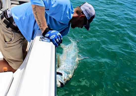 Big Bully Outdoors: Captain Andrew releasing a tarpon