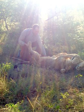 Lion Encounter : photo2.jpg
