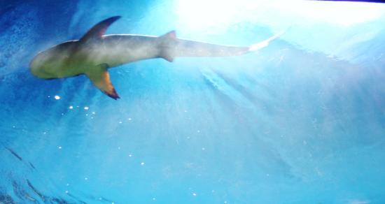 Lit Shark Picture Of Vancouver Aquarium Vancouver Tripadvisor